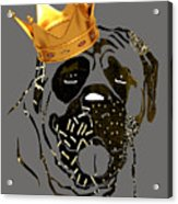 Top Dog Collection Acrylic Print