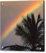 Top Of A Palm Tree Acrylic Print