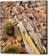 Tracks Of Color In Valley Of Fire Acrylic Print
