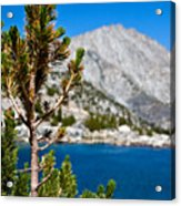 Treasured Pine Acrylic Print