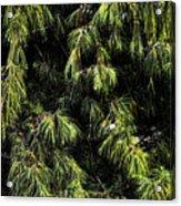 Tree 8 Acrylic Print