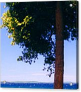 Tree By The Lake 3 Acrylic Print