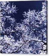 Tree Fantasy 17 Acrylic Print