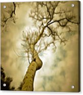 Tree Top In The Clouds Acrylic Print