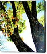 Tree With Light Acrylic Print