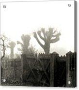 Trees In The Fog Acrylic Print