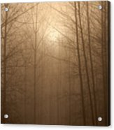 Trees Silhouetted In Fog Acrylic Print