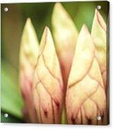 Tropical Garden 7 Acrylic Print