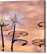 Tropical Lily Acrylic Print