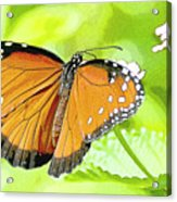 Tropical Queen Butterfly Framing Image Acrylic Print