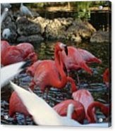 Tropical Sanctuary Acrylic Print
