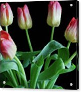 Tulip Bouquet Acrylic Print by Tracy Hall