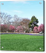 Tulips In The Park. Acrylic Print