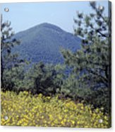 143419-turk Mountain Overlook  Acrylic Print