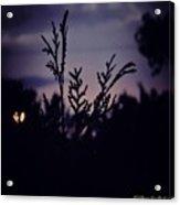 Twilight  Acrylic Print