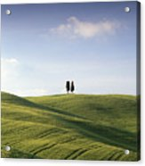 Twin Cypresses Acrylic Print