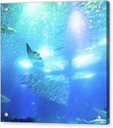 Undersea Deep Background Acrylic Print