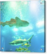 Undersea Shark Background Acrylic Print