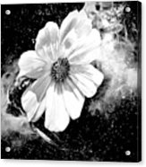 Universal Floral Acrylic Print