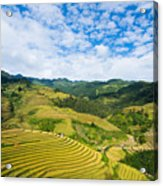 Vietnam Rice Terraces Acrylic Print