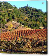 Vineyard 3 Acrylic Print