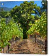 Vineyard Sauvignon Blanc Grapes Acrylic Print