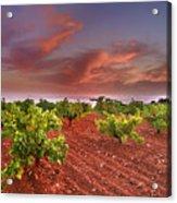 Vineyards At Sunset Acrylic Print