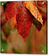 Waiting For Fall Acrylic Print