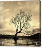 Wanaka Tree - New Zealand Acrylic Print
