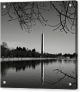 Washington Memorial Framed By Cherry Trees In The Winter Acrylic Print