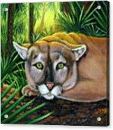Watching  Florida Panther Acrylic Print