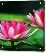 Water Lilies Acrylic Print