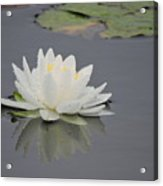 Water Lily Collection Acrylic Print