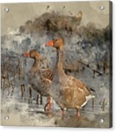 Watercolour Painting Of Beautiful Greylag Goose Anser Anser In W Acrylic Print