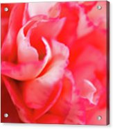 Waves Of Pink Acrylic Print