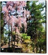 Weeping Cherry Acrylic Print