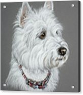 West Highland White Terrier  Acrylic Print by Patricia Ivy