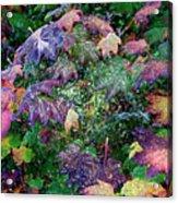 Wet Washington Autumn Fantasy 1 Acrylic Print