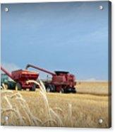 Wheat Harvest 2016 Acrylic Print