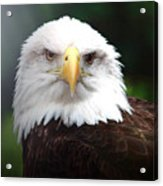 Where Eagles Dare 4 Acrylic Print