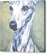Whippet Acrylic Print