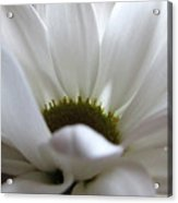 White Beauty Acrylic Print