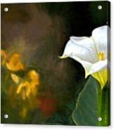 Awakening Flower Acrylic Print