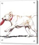 White Frisbee Dog Acrylic Print