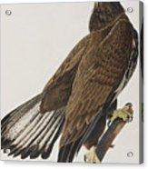 White-headed Eagle Acrylic Print