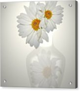 White On White Daisies Acrylic Print
