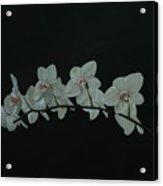 White Orchids No.2 Acrylic Print