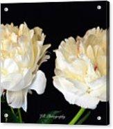 Peonies In Cream Acrylic Print