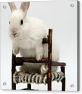 White Rabbit  Acrylic Print