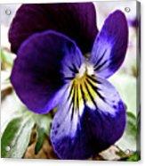 Wild Ground Flowers Acrylic Print